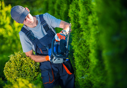 Man in overall trimming a hedge