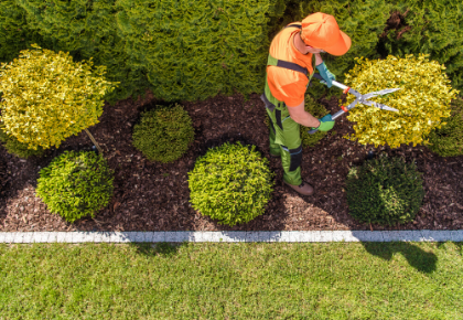 Vendor Management Man Trimming Hedges Birds Eye View